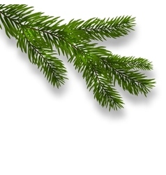 Green lush branch spruce and realistic shadows vector