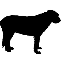 Irish wolfhound silhouette vector