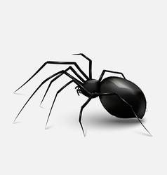 Scary Spider vector image