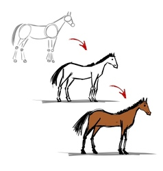 Stages of drawing horse sketch for your design vector image