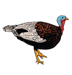 turkey isolated on white background vector image