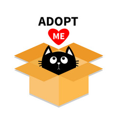 Adopt me dont buy cat inside opened cardboard vector
