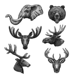 sketch icons of wild animals heads vector image