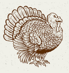 Turkey on white background thanksgiving theme vector