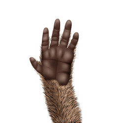 Animal paw icon vector