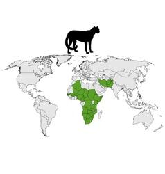 Cheetah distribution vector