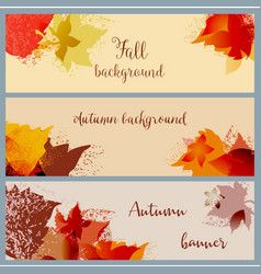 fall leaf banner set autumn in bright foliage vector image