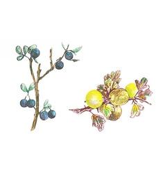 Gooseberry and blackthorn vector