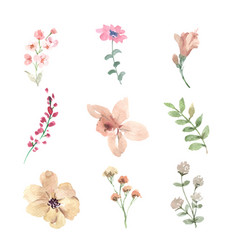 Set watercolor flower bud hand-drawn floral vector