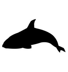 killer whale cetacea animal aquatic animals orca vector image vector image