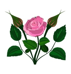 Bush rose on a white background vector