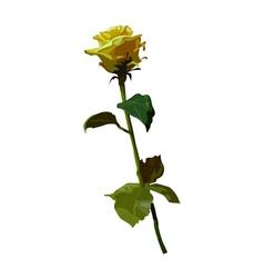 Rose yellow lemon vector