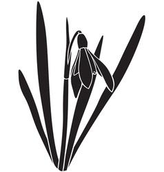 Snowdrop silhouette vector