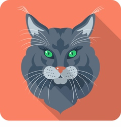 Cat Maine Coon American Longhair icon flat vector image vector image