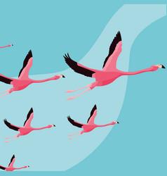 beautiful flamingos birds flock flying vector image
