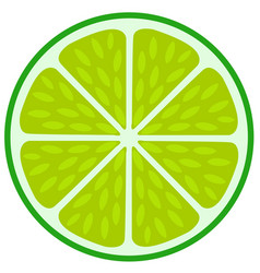 green lime slice- citrus fruit cut section vector image