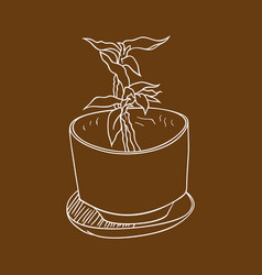 Plant in the pot 2 vector