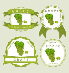 the colored grape vector image