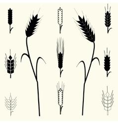 Wheat Ears set vector image