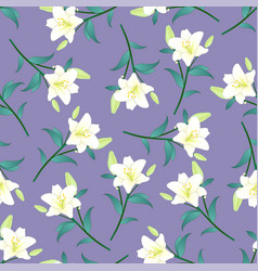 white lily on purple background vector image