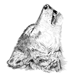 Wolf howls sketch vector image