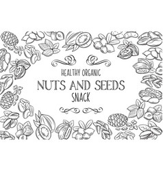 hand drawn sketch nuts and seeds vector image