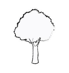 oak tree foliage ecosystem plant sketch vector image vector image