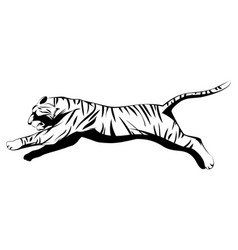 Big tiger jumping vector