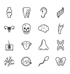 Set of internal organs icons eps10 format vector image vector image