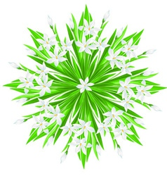 Spring flower star vector