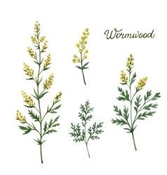 Hand drawn watercolor botanical vector image vector image