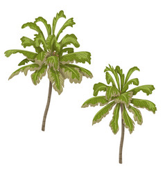 palm trees isolated vector image vector image