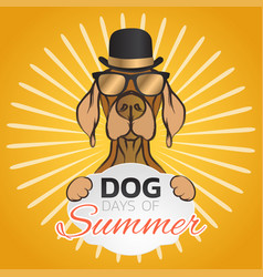 dog days of summer logo icon design vector image