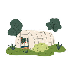 Greenhouse with tomatoes rural landscape element vector