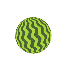 Watermelon rubber ball vector