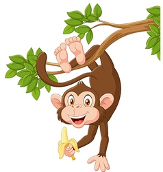 Cartoon happy monkey hanging and holding banana vector image