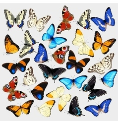 Collection of butterflies vector