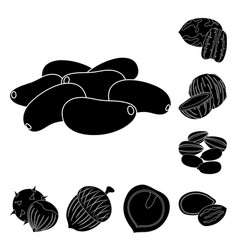 different kinds of nuts black icons in set vector image