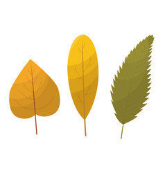 fall leaf collection set autumn leaves vector image