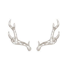 Monochrome drawing deer stag or hart antlers vector