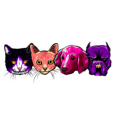 seamless doodle dogs and cats faces colorful vector image