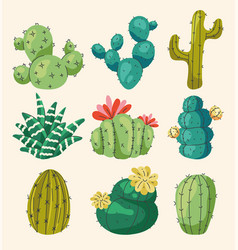 set different home cactus flowers vector image