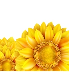 Sunflower isolated on white background eps 10 vector