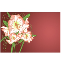 Background with amarillis vector image