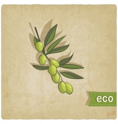 olive eco background vector image