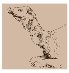 Vintage camel sketch vector image vector image