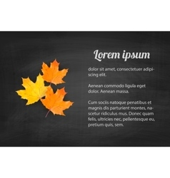 Autumn blackboard background with realistic maple vector