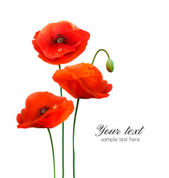 red poppy flowers isolated on white background vector image
