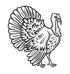 turkey cock icon hand drawn style vector image