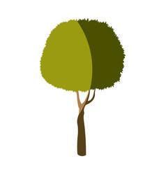 tree plant foliage stem trunk vector image